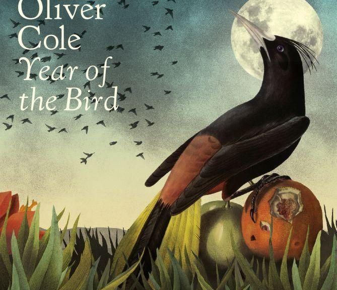 Year of the Bird album cover